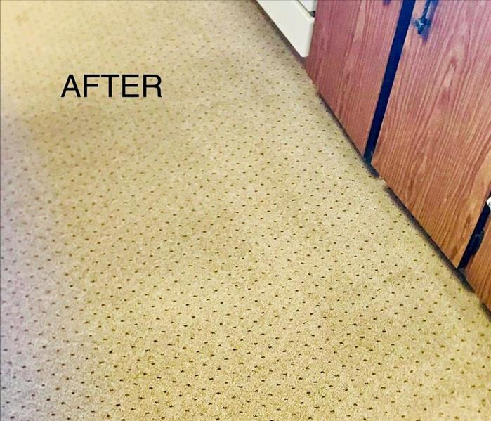 Cleaned carpet in Ebensburg After