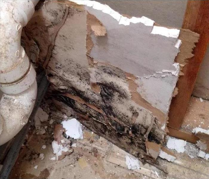Mold Remediation Can I Prevent Mold From Returning To My Home?
