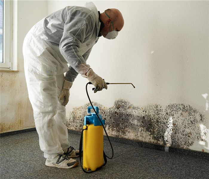 specialist in combating mold in an apartment