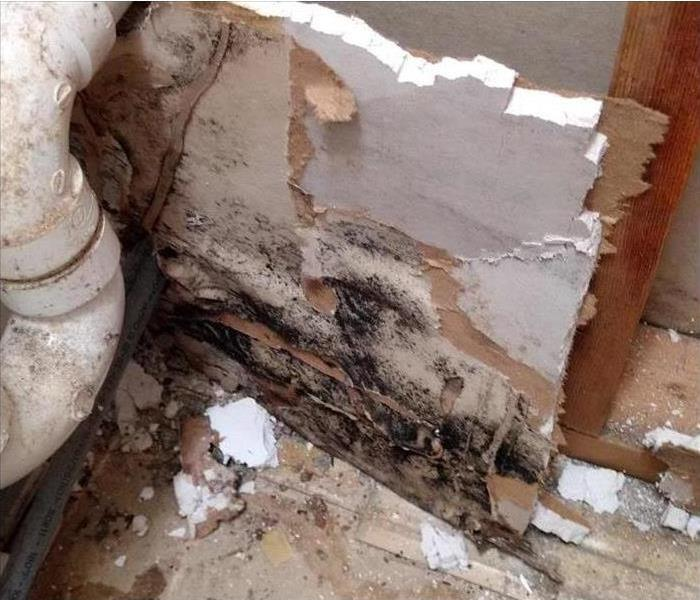 Mold damage in walls