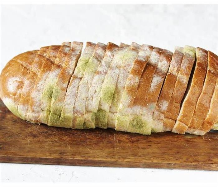 Mold growth on bread