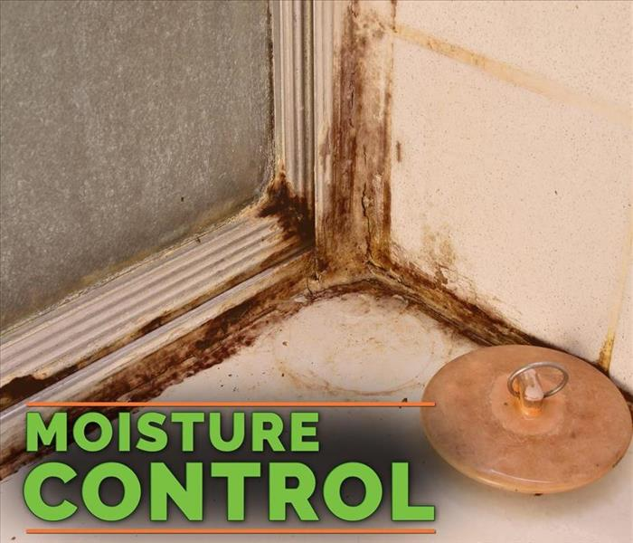 Commercial 3 Mold Prevention Tips for Your Business
